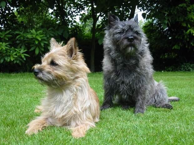 15 пород супермилых собак, которые подходят даже аллергикам