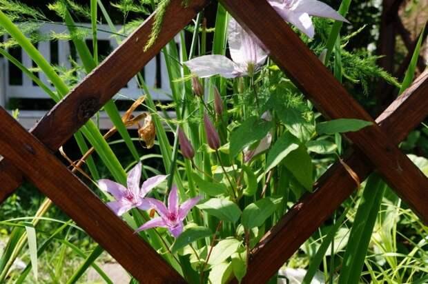 Многофункциональная опора для растений, или Как эффектно спрятаться от соседей?