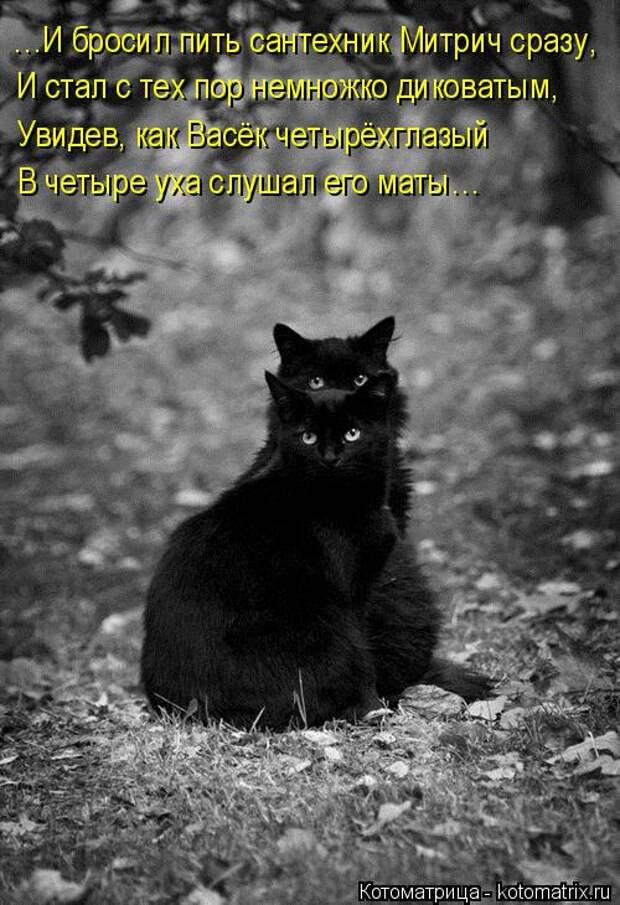 Котоматрица: …И бросил пить сантехник Митрич сразу, И стал с тех пор немножко диковатым, Увидев, как Васёк четырёхглазый В четыре уха слушал его маты…