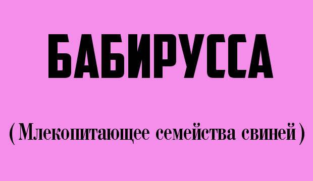 Ты не поверишь! 12 странных слов, которые и правда есть в русском языке