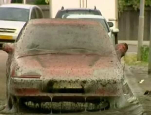 Парень припарковал свою красную Honda на улице. Утром он ее не узнал...