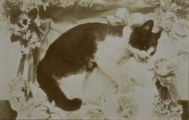 20 ретро фотографий кошек 20-х годов прошлого века