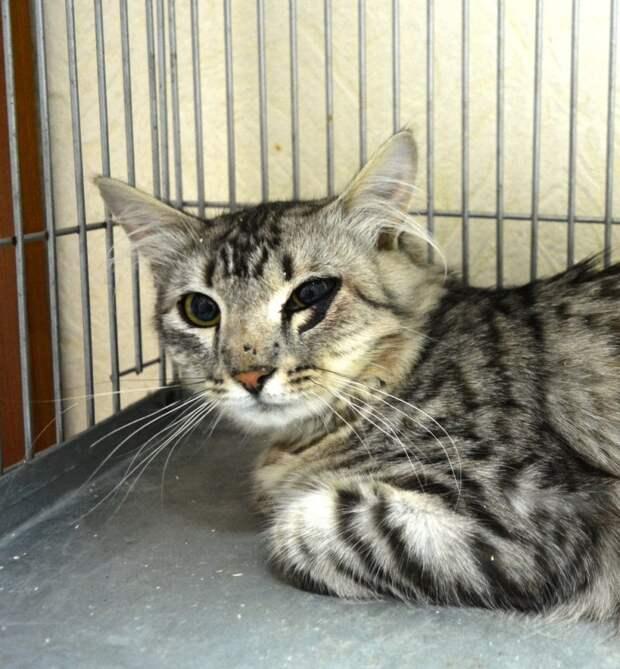 Дикий кот с криками пытался вырваться из клетки