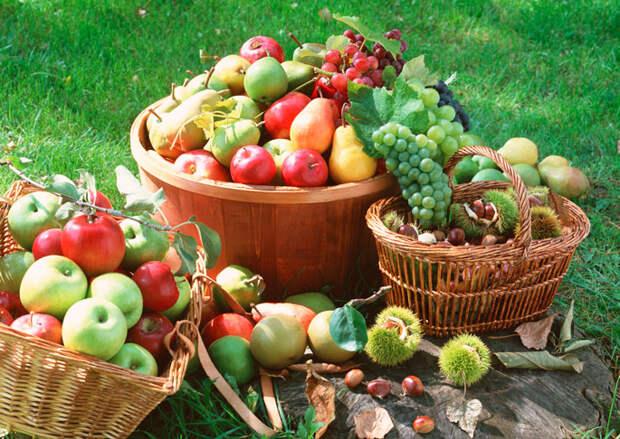 Хитрости и доступные советы начинающим и опытным садоводам