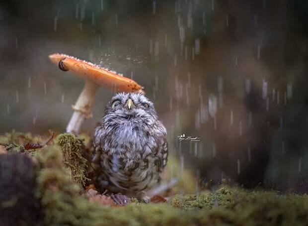 Свежая знаменитость в интернете — крошечная сова!