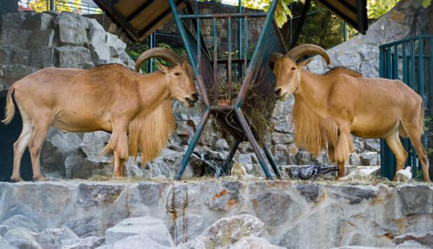 Прогулка по белградскому зоопарк