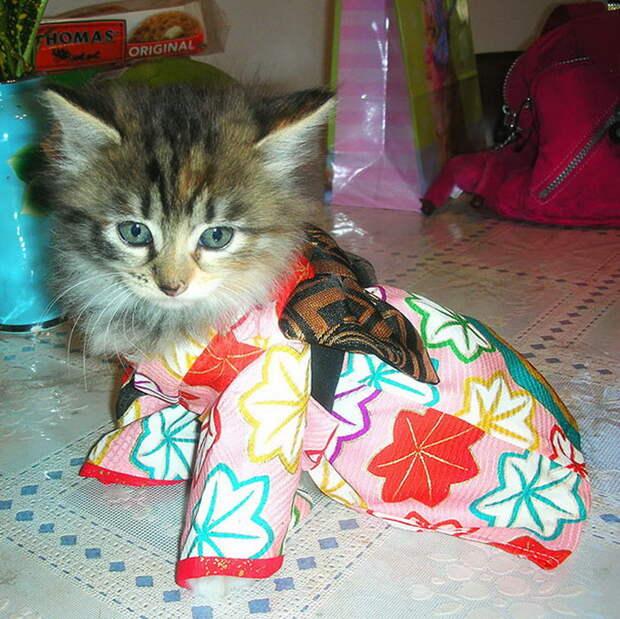 Кошки в кимоно – это тренд в Японии!