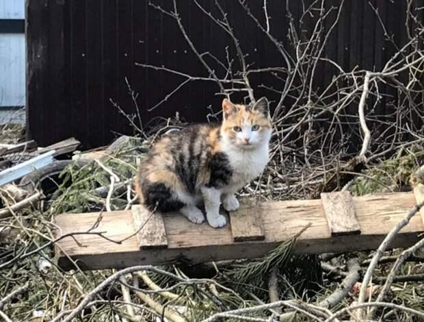 Вот такая красавица выживает в заброшенном поселке в Ленинградской области. Она очень, очень ждёт помощь!