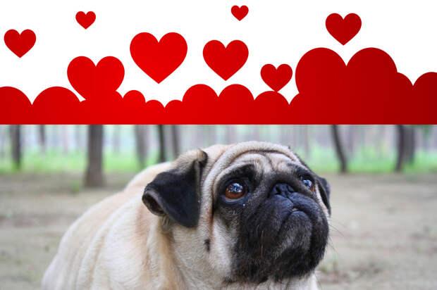 Афоризмы о любви и толстые собаки – вместе навсегда!