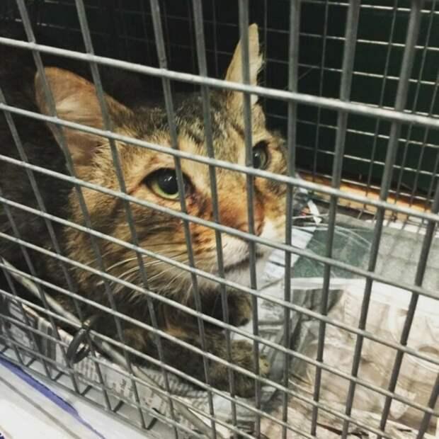 Бродячий кот подошёл к девушке-волонтёру и дал понять, что больше не желает жить на улице