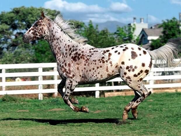 Породы лошадей. - Страница 4 - Форум