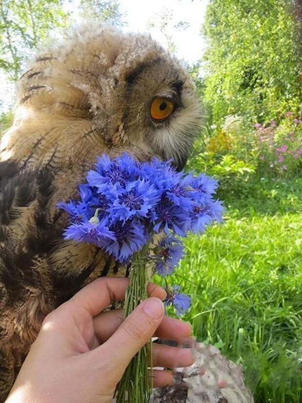 Дарите совушкам цветы!