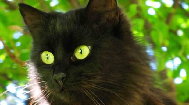 Бродя по лесу, охотник ожидал поймать добычу, а встретил брошенного зеленоглазого котика