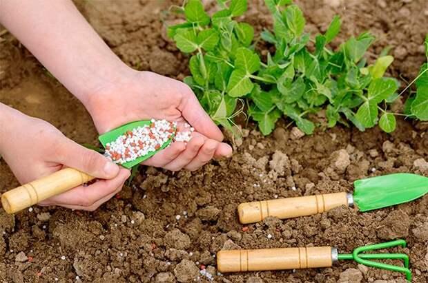 Огородные мифы. Топ-10 самых распространенных заблуждений дачников
