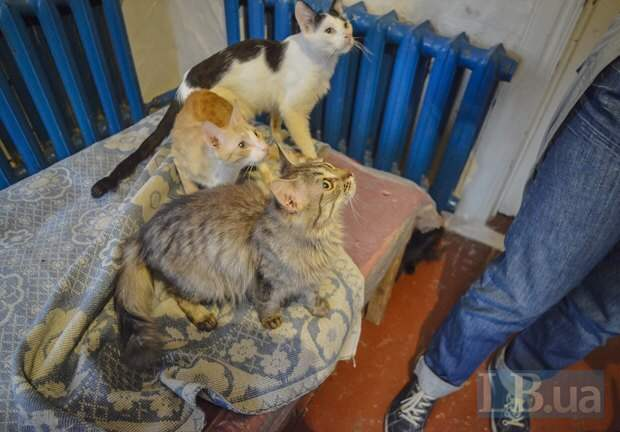 Котики - корреспонденту LB.ua: Есть чо? А если найдем?