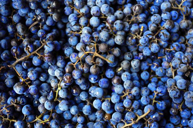 Кизляр, самовар, терруар: про вино на Руси