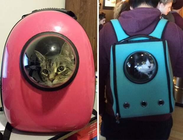 Коты-астронавты (сумки-переноски, подборка)