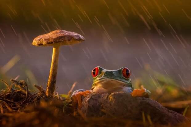 лягушки и жабы, необычные лягушки, красивые лягушки