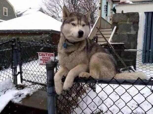 Собаки которые думают что они кошки, собаки ведут себя как кошки