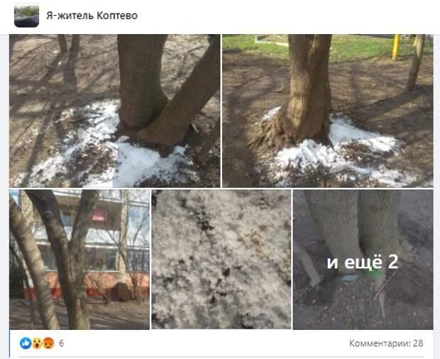 На Большой Академической неизвестные пытались «отравить» дерево