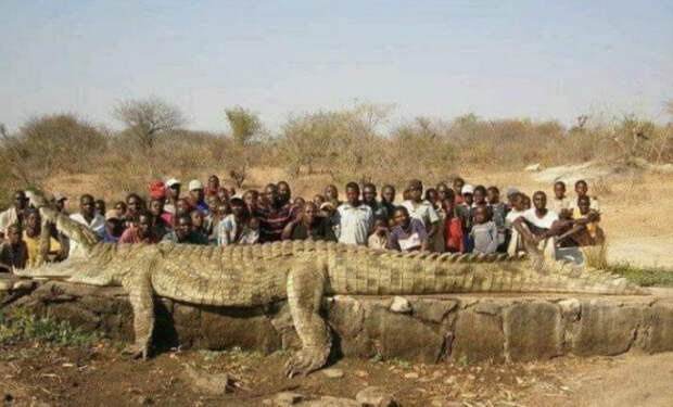 Крокодил гигант