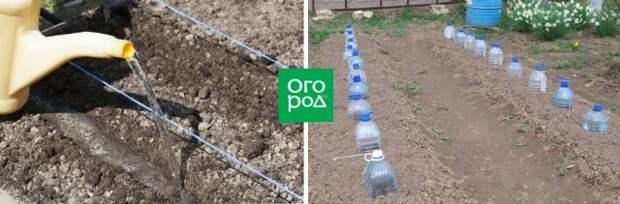 Как вырастить капусту
