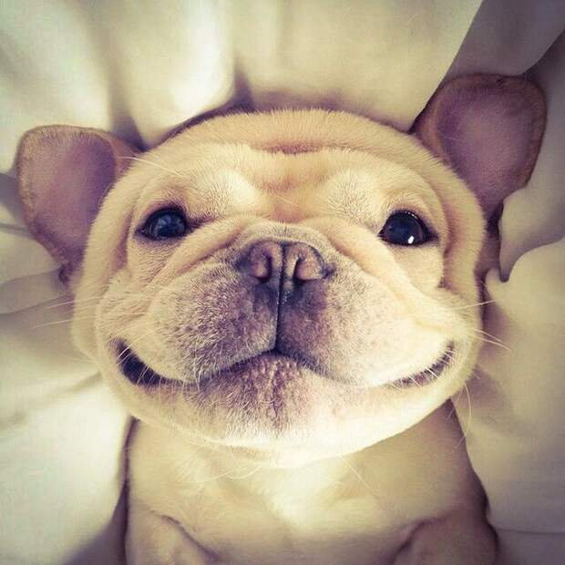 Фотографии, которые вызывают улыбку!