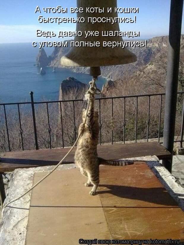 Котоматрица: А чтобы все коты и кошки  быстренько проснулись! Ведь давно уже шаланды  с уловом полные вернулись!