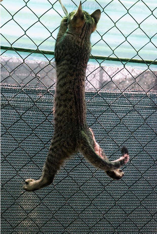 34.  кот, поза