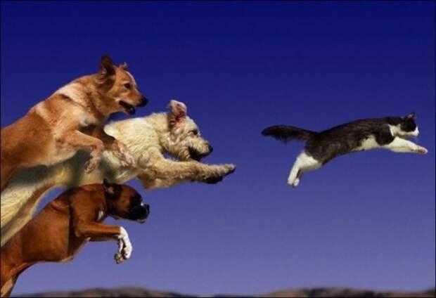 Породы собак, которые не смогут ужиться с кошками