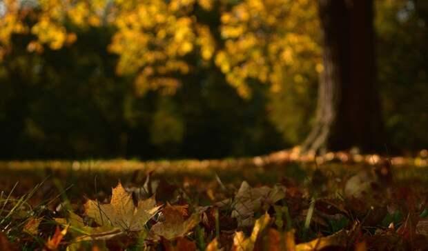 Более 200 крупных деревьев будут высажены вэкопарке Нижнего Тагила