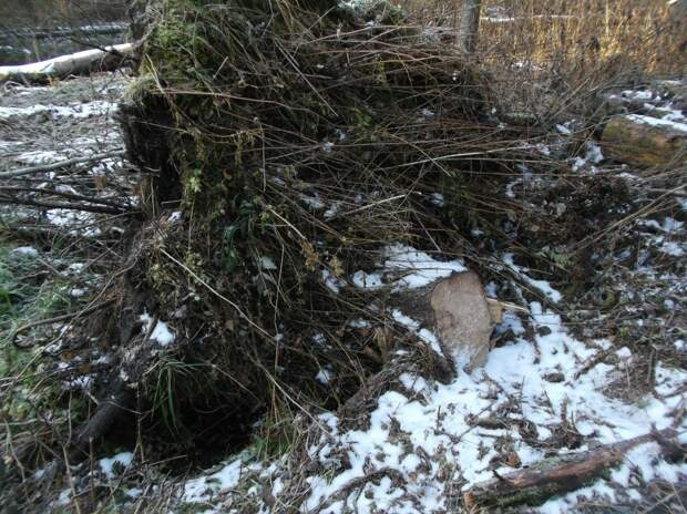 5 фактов незаконной заготовки новогодних елей выявили в Удмуртии