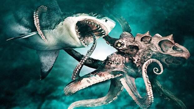Ученые выяснили почему кашалоты и киты боятся кальмаров