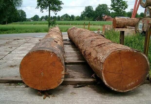 Ценные породы дерева деревья, древесина, интересное, природа, факты
