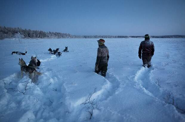 Жизнь в Арктике