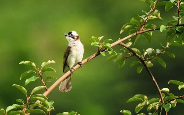 В США начался необъяснимый мор перелетных птиц
