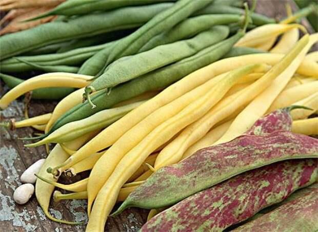 Фасоль: сорта и виды