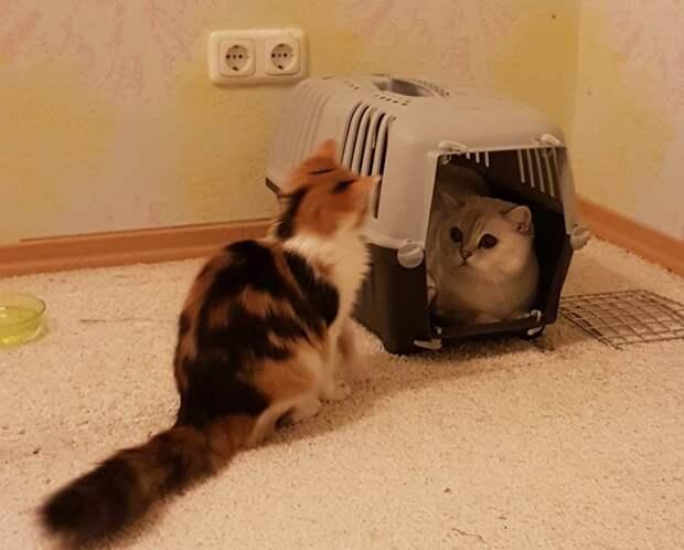Крошка-котенок не знал, куда деться от преследующих его детей