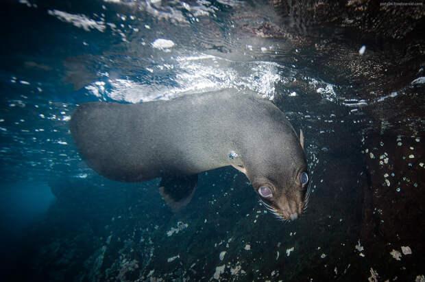 15 мастеров подводной фотографии из России