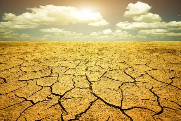 Всемирная история голода: ответ на уничтожение продуктов
