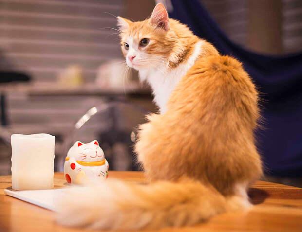 """Кафе """"Котики и люди"""". Правила жизни в кошачьем раю"""