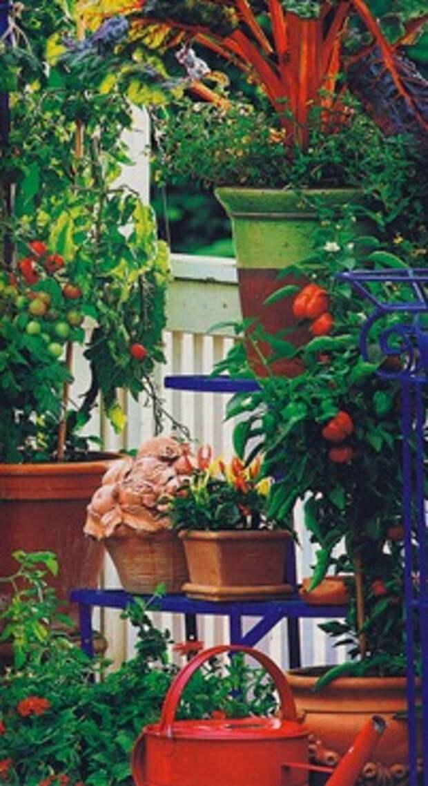 Витамины с балкона
