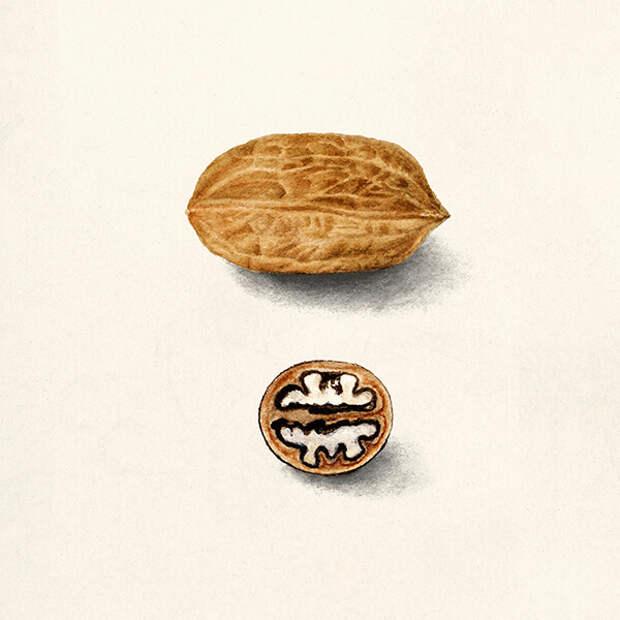 Чем опасна аллергия на орехи и чем их можно заменить?