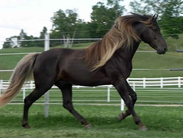 Игреневая животные, красота, лошади