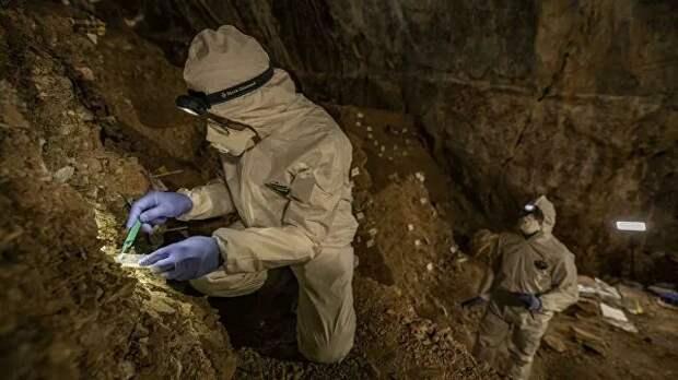 Ученые впервые воссоздали ДНК ископаемого медведя, сохранившуюся в почве