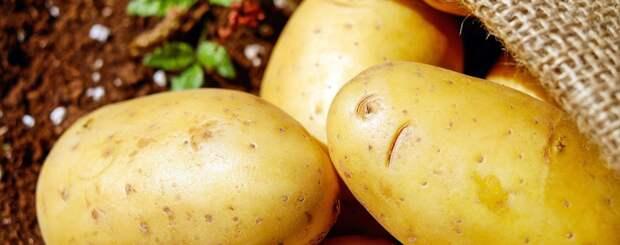 На Украине обострилась проблема с картофелем