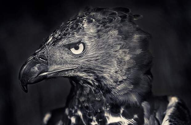 Удивительные фотографии дикой природы