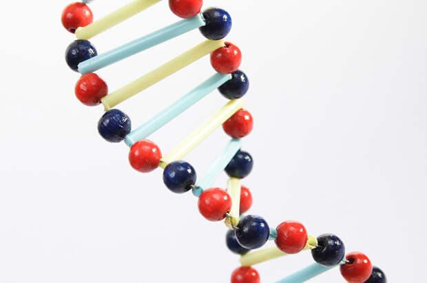 Эстрогены заставляют организм накапливать жир