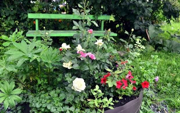 Основные правила посадки роз осенью