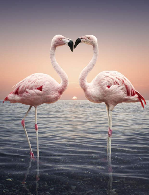 Любовь повсюду: милейшие фотографии животных в честь Дня всех влюбленных